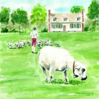 House with sheep (LR)